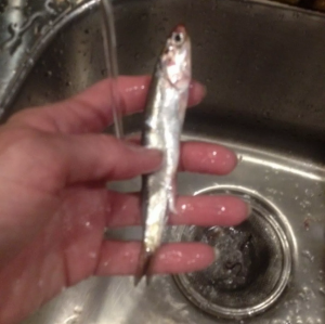 Cleaning anchovy